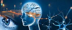 Vign_ob_9143ac_eye-brain-photo-neuropsych-workshop1